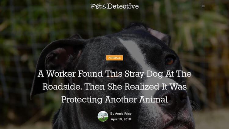 Pets Detective